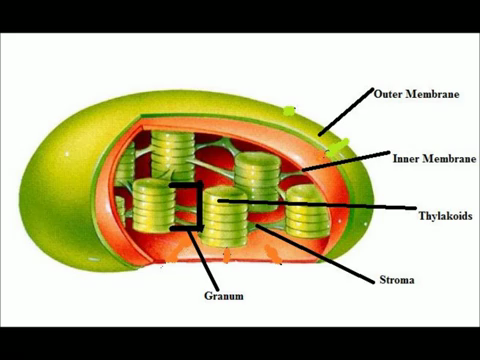 revision notes biology form 1 - FREE KCSE PAST PAPERS